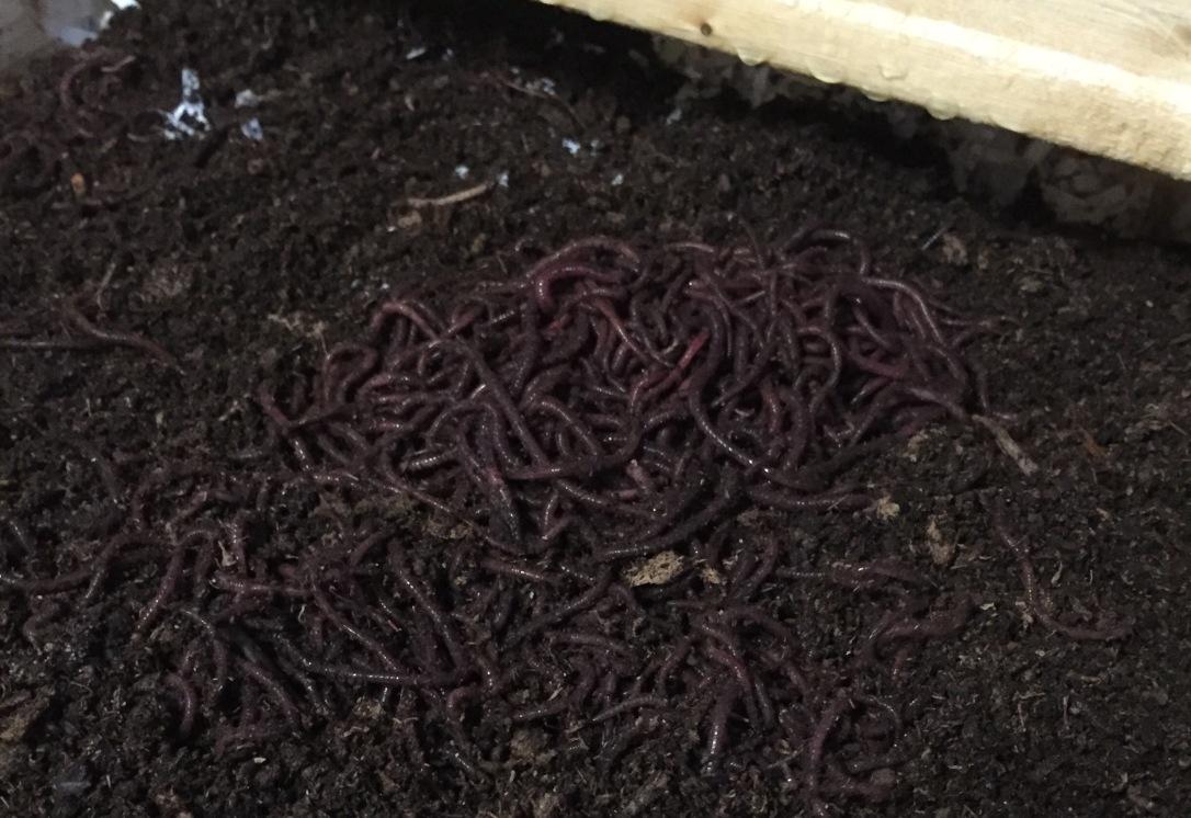 worm23